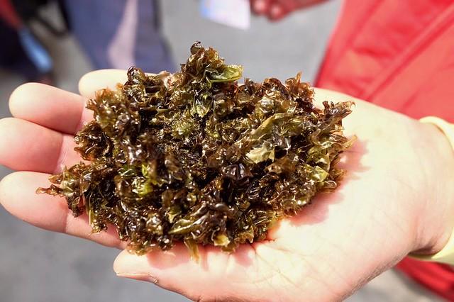 潮間帶的螺貝類已收到汙染,油污影響整個區域的生態與產業。圖片來源:海洋公民基金會。