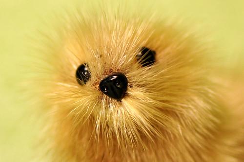 Makro Makrofotografie Fotografie Indoor-Fotographie Schlechtwetter-Indoorfotografie Januar 2016 Brigitte Stolle Mannheim Seehund Heuler niedlich kleine putzig süß
