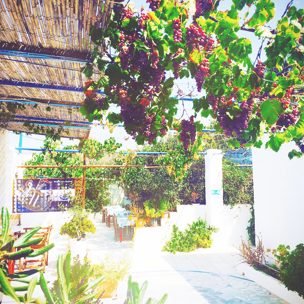 Capture the Color 2015, vines in Greece | via It's Travel O'Clock