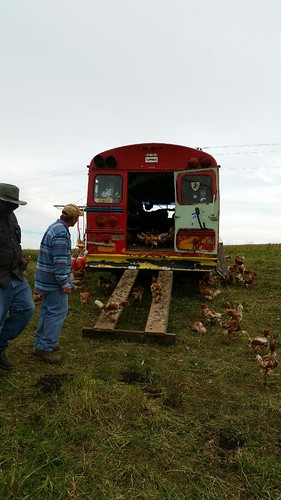 The bus containing 300 laying hens