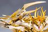 [Comentários] - Saint Cloth Myth EX - Soul of Gold Mascara da Morte  24698706676_c3db8b552e_t