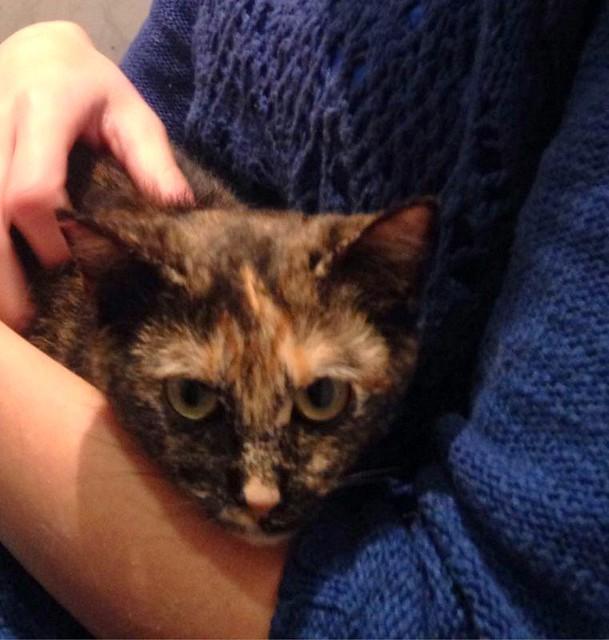 Sunny, preciosa gatita Carey mimosona y muy buena esterilizada, nacida en Septiembre´15, en adopción. Valencia. FALLECIDA. 26256309720_4d7ffc2b78_z