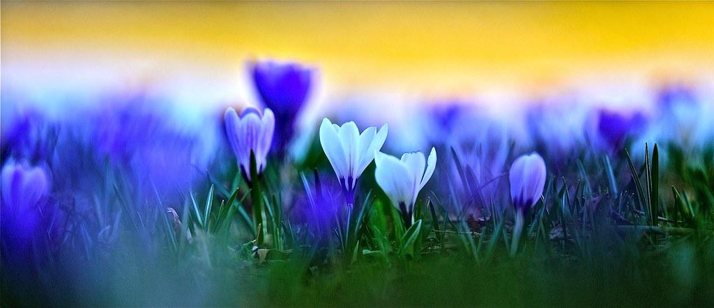 Photo fleurs et nature panoramique le printemps fleurs d flickr - Initiatives fleurs et nature ...