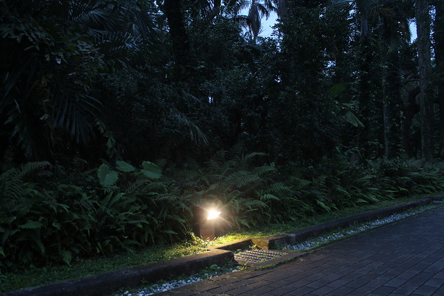 台北植物園的夜晚更溫柔了!降低照明設備,行人不會更危險,植物卻能獲得好的成長環境!攝影:廖靜蕙
