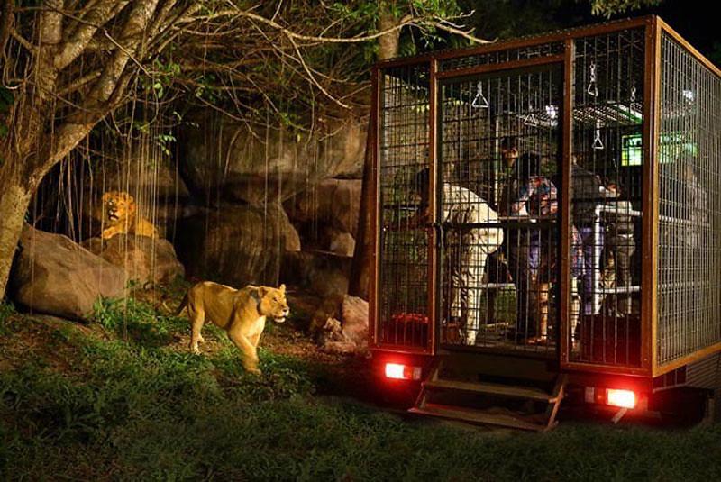 8-night-safari