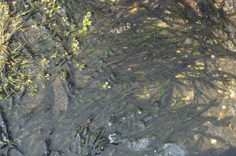 Peñalara. Alpino. Artrópodos, anfibios y reptiles 26168246696_fd4d417ffc_c