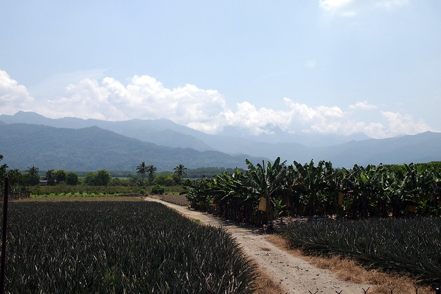 龍泉位於大武山下,當地主要為農地,居民組成多元。攝影:李育琴