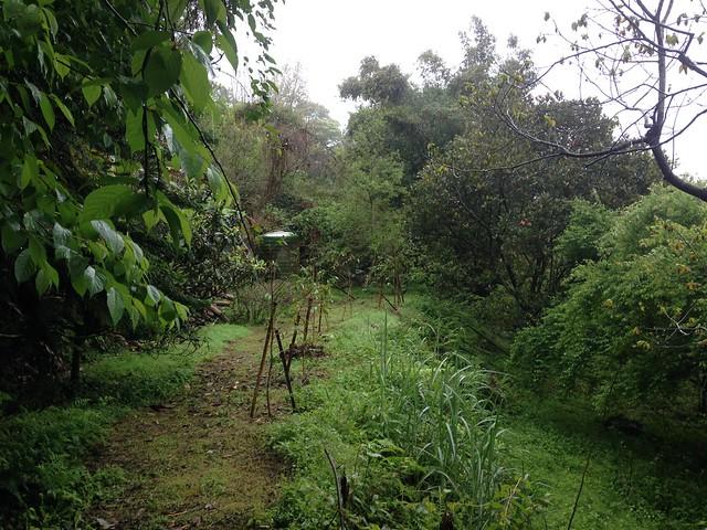 中興大學森林系退休教授羅紹麟的林地。攝影:廖靜蕙