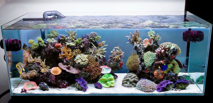 Aquarium Designs