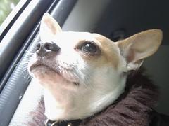 Beaker on a road trip