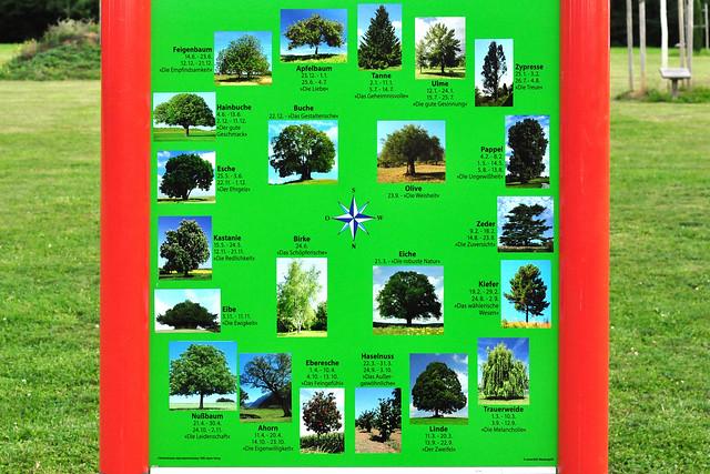 """Baum-Horoskop Baum-Orakel Keltischer Baumkreis Bäume lügen nicht Horoskop Geburtsdatum Apfelbaum: 23.12. - 1.1. und 25.6. - 4.7. """"Die Liebe"""" Tanne: 2.1. - 11.1. und 5.7. - 14.7. """"Das Geheimnisvolle"""" Ulme: 12.1. - 24.1. und 15.7. - 25.7. """"Die gute Gesinnung"""" Zypresse: 25.1. - 3.2. und 26.7. - 4.8. """"Die Treue"""" Pappel: 4.2. - 8.2. und 1.5. - 14.5. und 5.8. - 13.8. """"Die Ungewissheit"""" Zeder: 9.2. - 18.2. und 14.8. - 23.8. """"Die Zuversicht"""" Kiefer: 19.2. - 29.2. und 24.8. - 2.9. """"Das wählerische Wesen"""" Trauerweide: 1.3 - 10.3. und 3.9. - 12.9. """"Die Melancholie"""" Linde: 11.3. - 20.3. und 13.9. - 22.9. """"Der Zweifel"""" Eiche: 21.3. """"Die robuste Natur"""" Olive: 23.9. """"Die Weisheit"""" Haselnuss: 22.3. - 31.3. und 24.9. - 3.10. """"Das Außergewöhnliche"""" Eberesche: 1.4. - 10.4. und 4.10. - 13.10. """"Das Feingefühl"""" Ahorn: 11.4. - 20.4. und 14.10. - 23.10. """"Die Eigenwilligkeit"""" Walnuss: 21.4. - 30.4. und 24.10. - 2.11. """"Die Leidenschaft"""" Eibe: 3.11. - 11.11. """"Die Ewigkeit"""" Kastanie: 15.5. - 24.5. und 12.11. - 21.11. """"Die Redlichkeit"""" Esche: 25.5. - 3.6. und 22.11 - 1.12. """"Der Ehrgeiz"""" Hainbuche: 4.6. - 13.6. und 2.12 - 11.12. """"Der gute Geschmack"""" Feigenbaum: 14.6. - 23.6. und 12.12 - 21.12. """"Die Empfindsamkeit"""" Birke: 24.6. """"Das Schöpferische"""" Buche: 22.12. """"Das Gestalterische"""" Bad Rappenau Foto und Text Brigitte Stolle Mannheim 2015"""