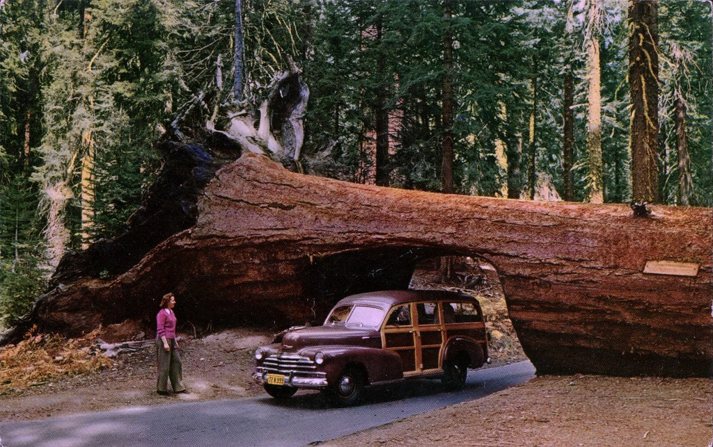 redwood trees california map with 23989970060 on Ultimate Hotel Guide Next California Vacation also 14650 besides Photograph Coastal Redwoods besides Yellowstone National Park further Sequoia National Park Created.