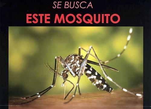 AionSur 24706326301_8bf2a85e3f_d El virus Zika, la enfermedad que provoca, síntomas y tratamientos Análisis