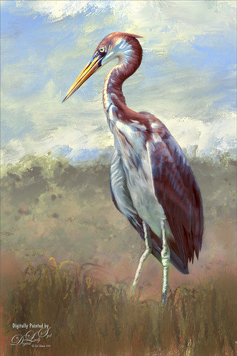 Painted image of a Tri-colored Heron