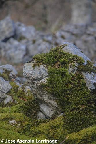 Parque natural de Gorbeia #DePaseoConLarri #Flickr -2814