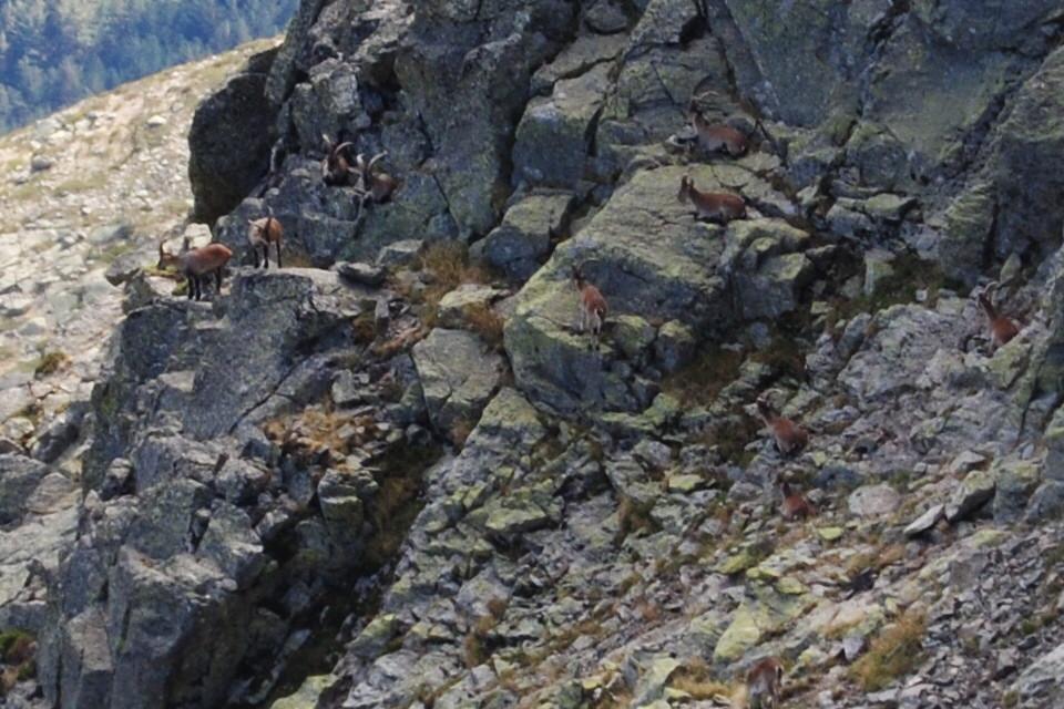 Peñalara. Alpino. Artrópodos, anfibios y reptiles 23918749121_ec209019f3_b