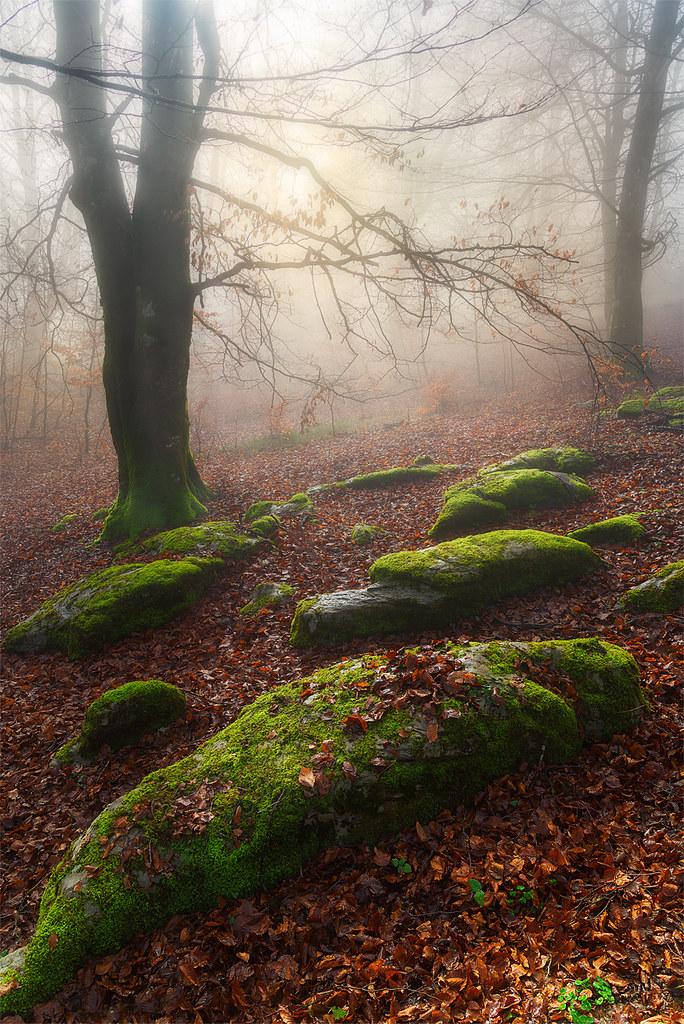 """01.- """"Luces del Bosque (ejercicios de composición)"""" - Patxii"""