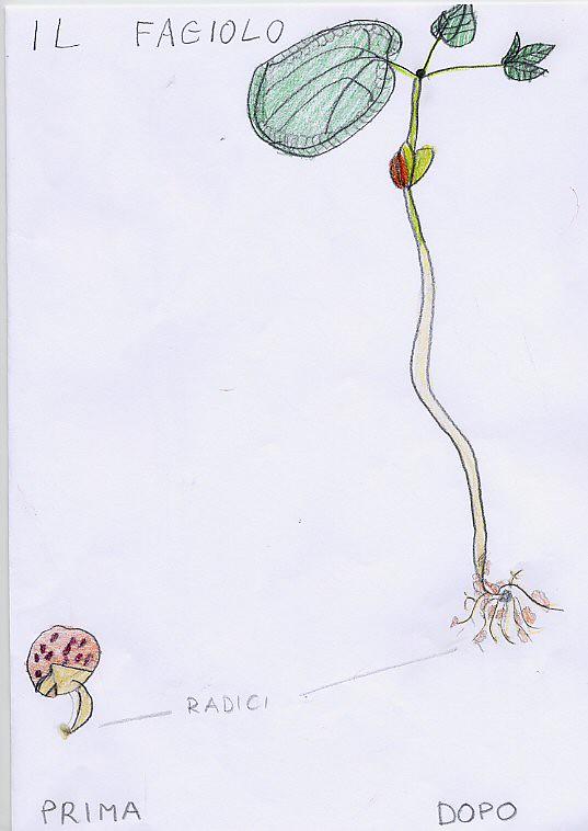 Naturalmente scienza si pu fare un orto anche in aula - Fatti di gargoyle per bambini ...
