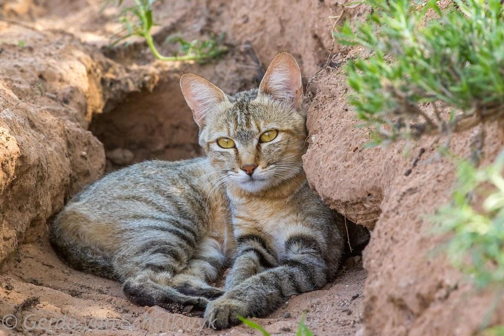 New Cat Hiding Not Eating
