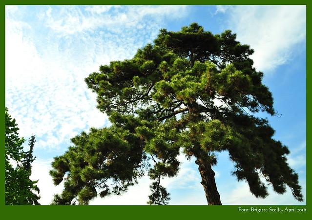 """So saß der Himmel heute aus. Das Aprilwetter war insgesamt sehr """"interessant"""". Mal gespannt, wie es ab morgen weitergeht :-) Wetter Himmel 30. April 2016 Neckarhausen Friedhof Foto Brigitte Stolle"""