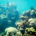 Ko Lipe diving via TinyBlackBird.com