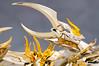 [Comentários] - Saint Cloth Myth EX - Soul of Gold Mascara da Morte  - Página 2 24607128182_07f7ec6644_t