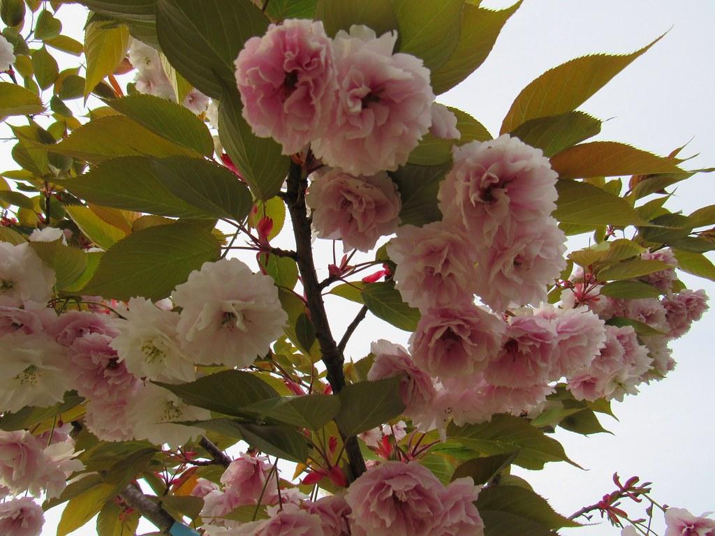 Flowers Jennifer C