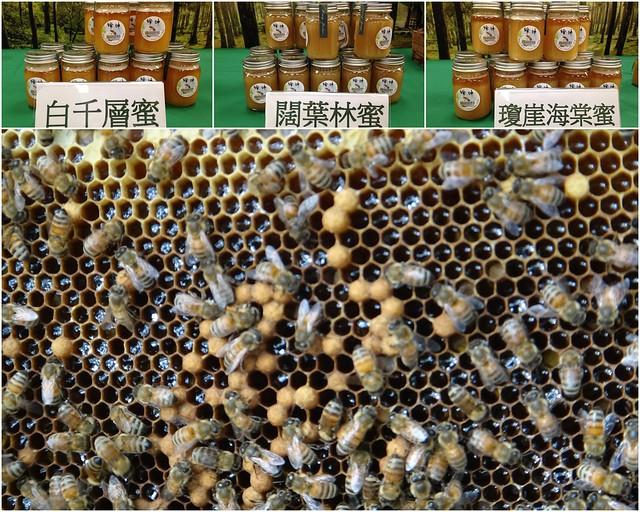 經過一年試驗,農委會林試所推出天然健康森林蜜,為森林生態系服務再添一軍。攝影:廖靜蕙