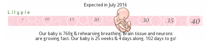lilypie pregnancy ticker fetal growth development size second trimester week 25 twenty five weeks baby evolution fetus