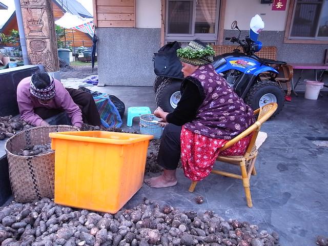 日常即景之伊娜處理著芋頭