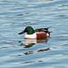 Ducky Durante