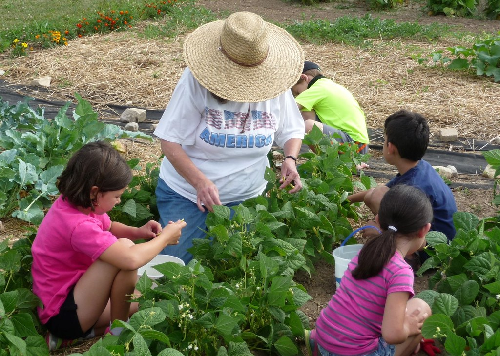 Master Gardener Volunteers tackle tough issues in their communities - food security, invasive species, pollinator decline, and more.