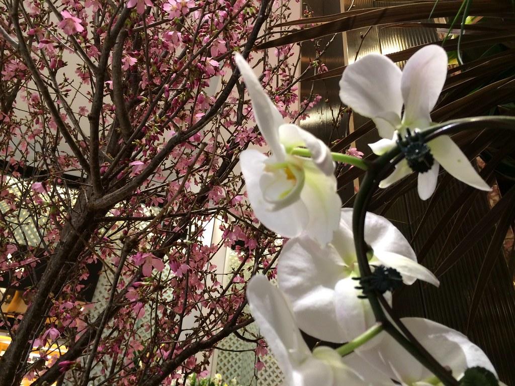 Colorful Flowers Macys Flower Show 2016 Macys Herald Squ…