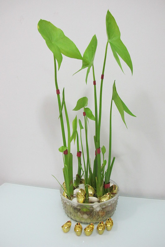 How To Grow Your Own Decoration For Chinese New Year