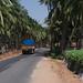 Coconut plantations near Coimbatore