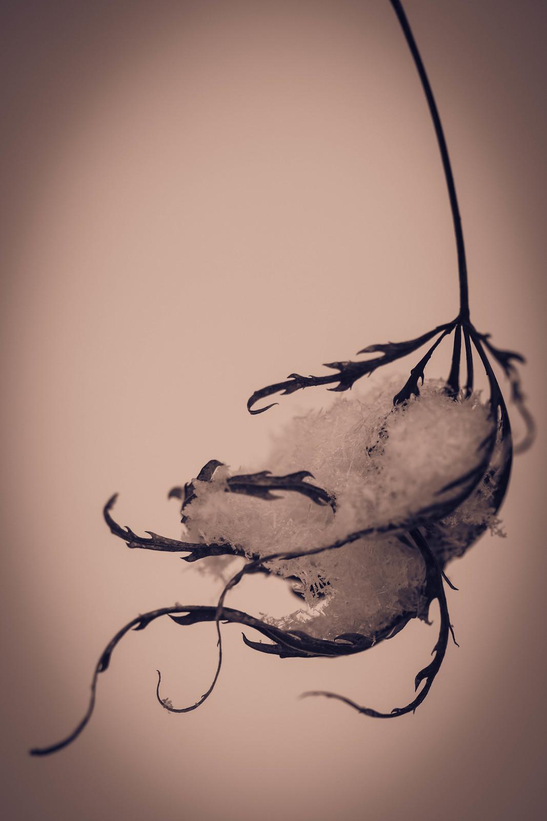 Macro Monday: The Cradling Hand