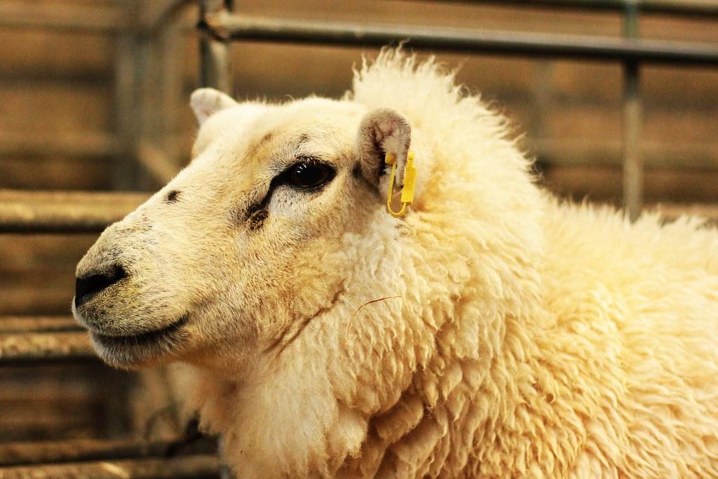 The Dogs of Greenhill Farm: Happy Eleventh Birthday, Suckie!
