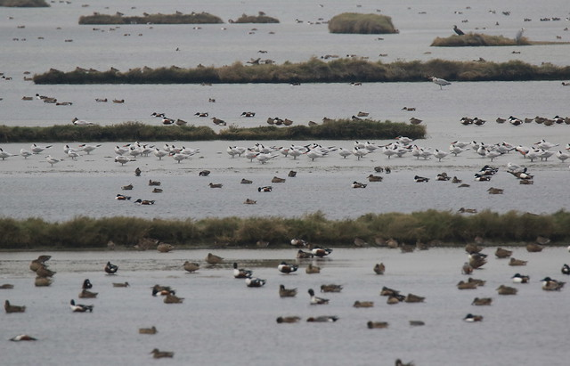 布袋蟬連三年水鳥天堂美譽。攝影:呂翊維;圖片來源:新年數鳥嘉年華