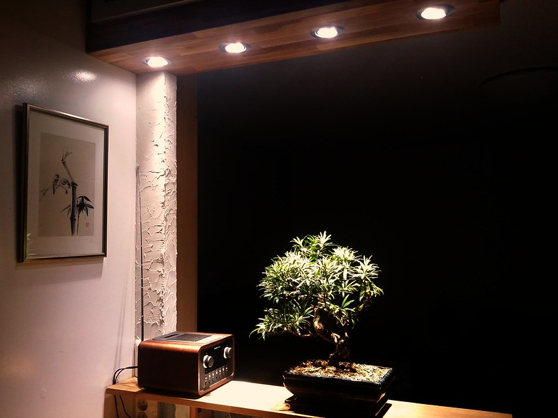 Indoor Bonsai under LED lights. - Page 16 25661905871_575732ca89_c