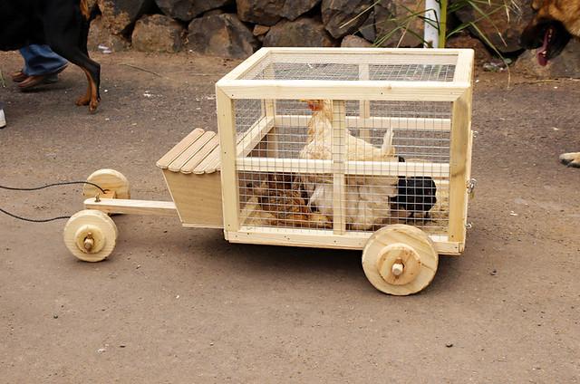 Hen in a cart, San Abad, Buenavista del Norte, Tenerife