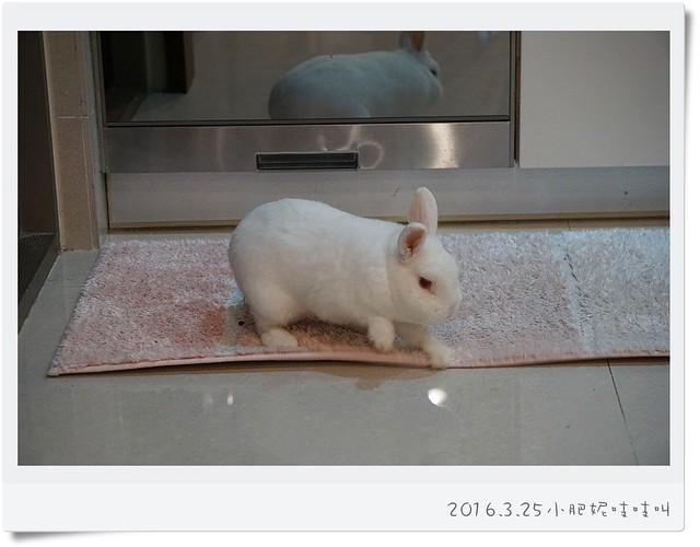 小兔居然6歲半了….驚!