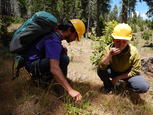Ray Gutteriez and Jessica Lackey, past Forest Service interns sampling wild strawberries