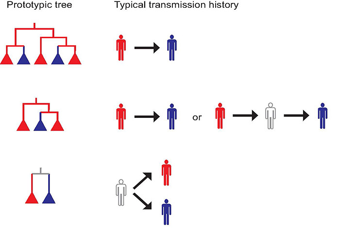Using computational techniques, scientists at Los Alamos National Laboratory are working to more clearly understand how diseases such as HIV are spread. In this image, arrows indicate actual transmission; red and blue persons are sampled, and the grey outline person is an unsampled link discovered in the computer analysis of the phylogenetic trees of the disease agents.