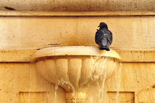 Nizza, im März 2016: Mindestens 1 Altstadtbummel pro Tag muss sein. Immer wieder gibt es Neues zu entdecken: Geschäfte, Restaurants, Auslagen, Leckereien ... Ein unendlicher Fundus für Fotografierbegeisterte! Foto Brigitte Stolle