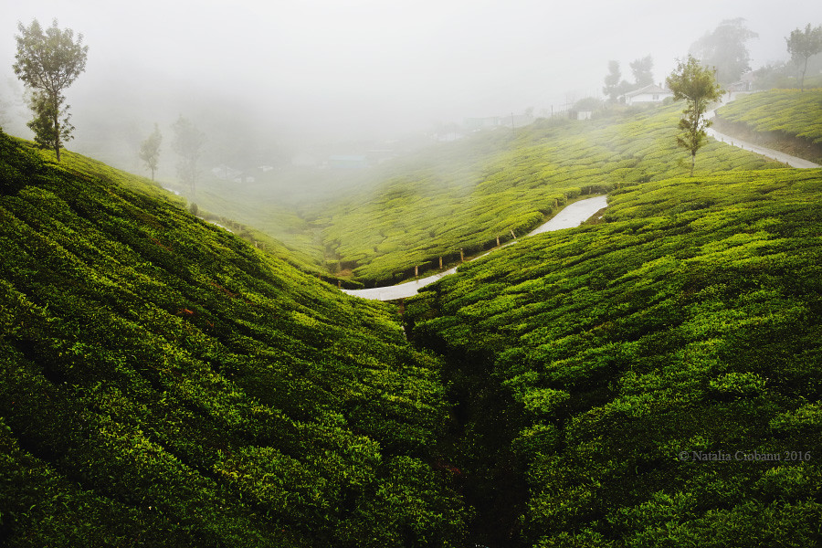 munnar, kerala, india, travel, landscape, керала, Индия, муннар,