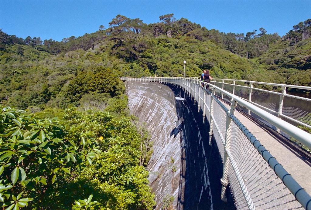 Frame 11.jpg   Zealandia wildlife sanctuary, Karori, Welling ...