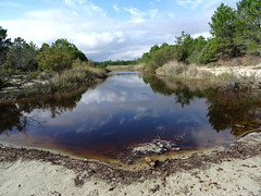 Le marais de Cattolica à son extrémité de la plage