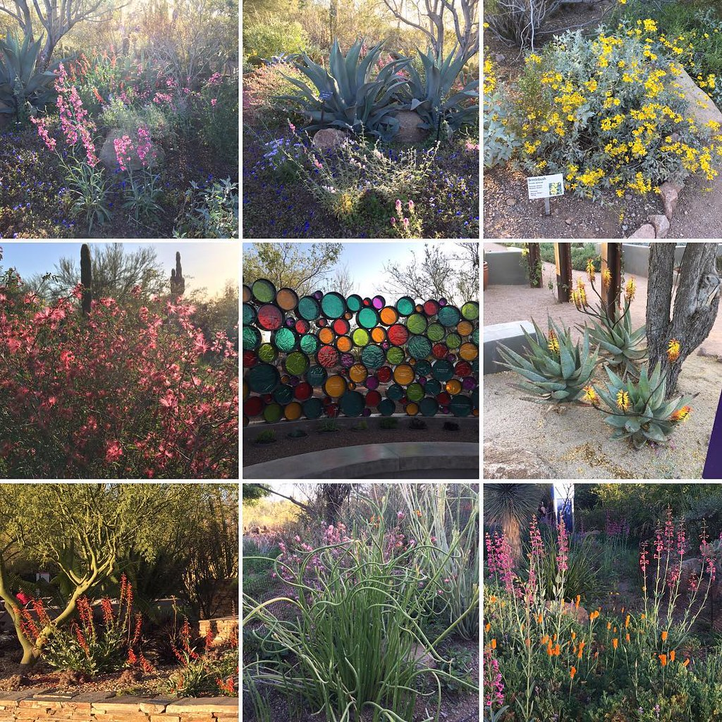 Springtime In The Desert Wildflowers And Cacti Abloom At