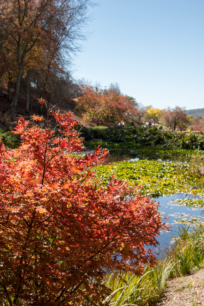 Mount Lofty Botanic Garden Ian Dodd Flickr