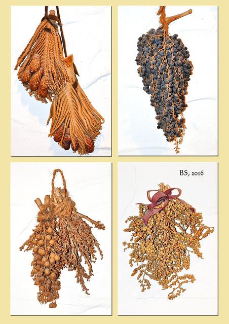 Getrocknete Pflanzen und Pflanzenteile Dekoration Naturbasteleien Trauben Zapfen Zweige Basteln mit Naturmaterialien Fotocollage Brigitte Stolle 2016